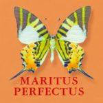 Maritus Perfectus
