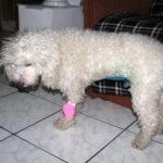 Ricky după operație