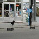 În București, ca-ntr-un roman
