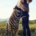 Îmbrățisarea unui tigru